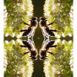 Božský ženský princip a včely – koncept synarchie
