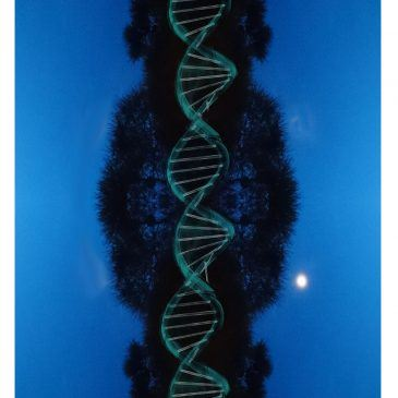 Genový klíč 35 a dar Dobrodružství